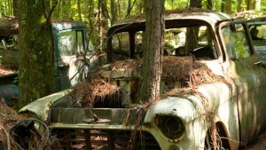 Chevy-truck-with-tree